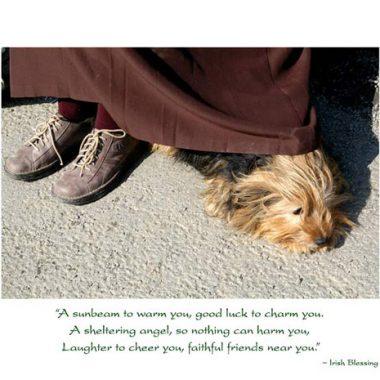 Faithful friends get well greeting card