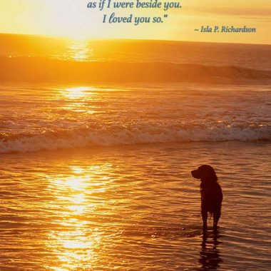 Sunset dog sympathy card