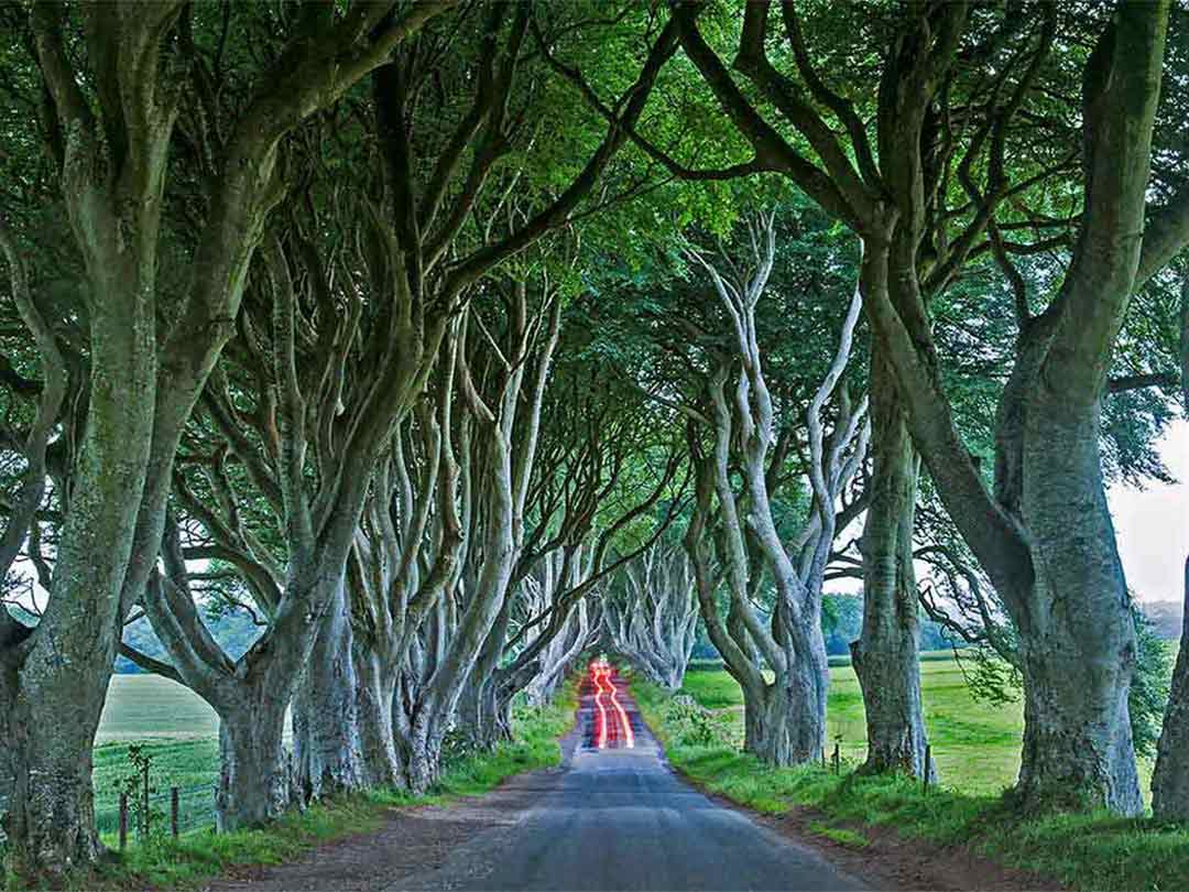 Dark Hedges - The Irish Card Shop - Mundo Images
