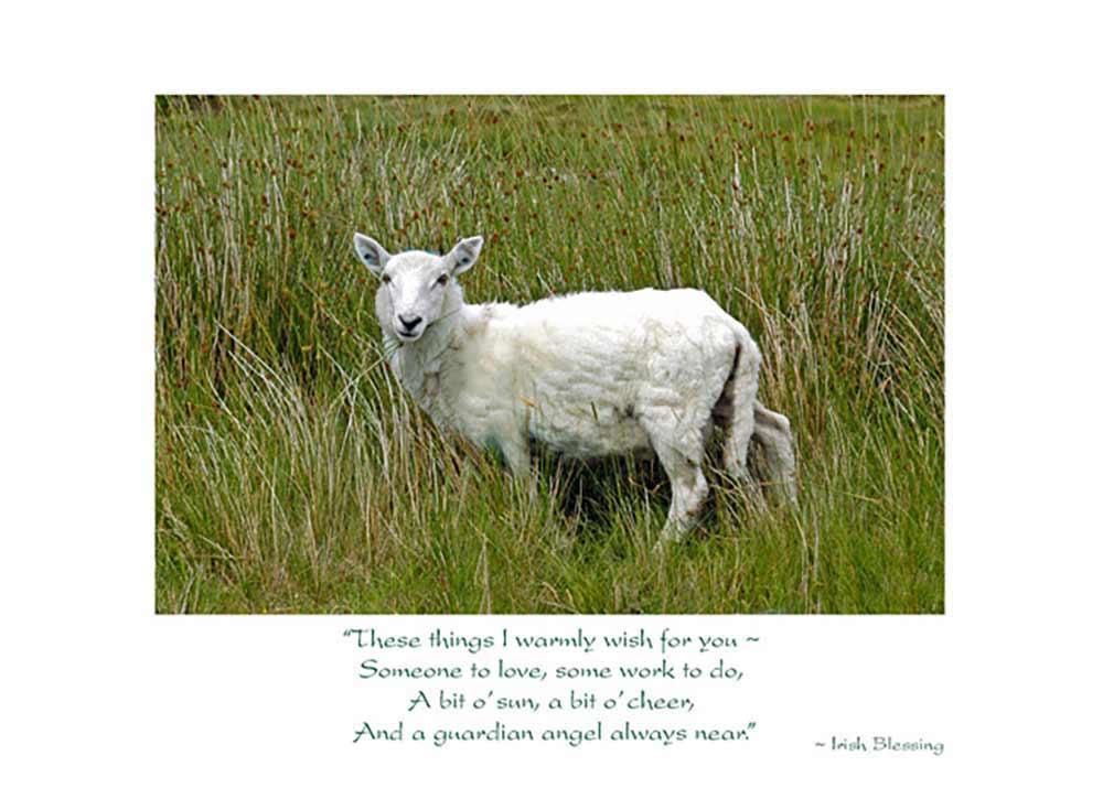 Sheep Irish Birthday Card Prev