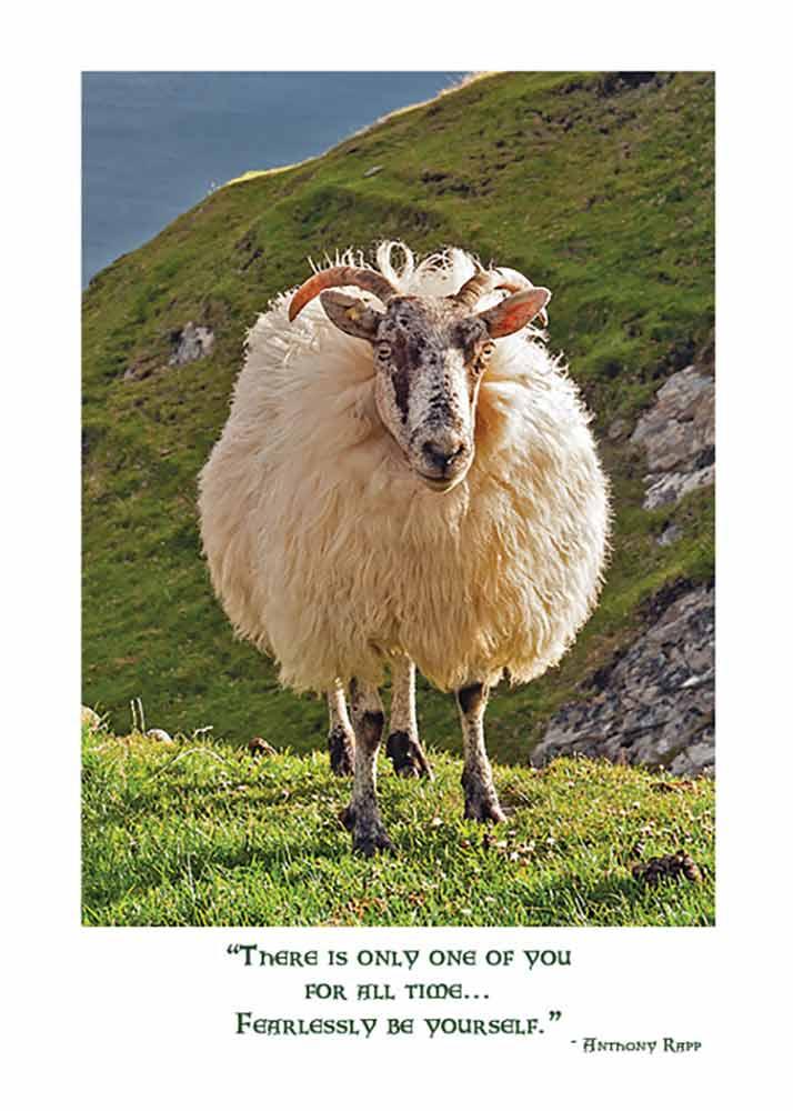 Irish Sheep Birthday Card The Irish Card Shop Features 140 Irish Cards