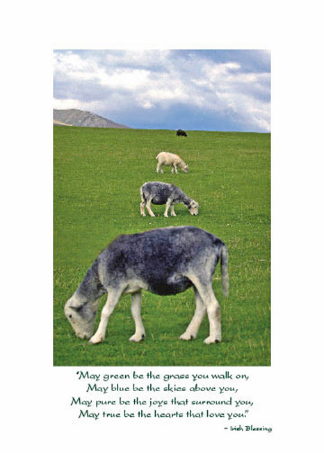 Sheep In Line Birthday Card May Green Be The Grass You Walk On