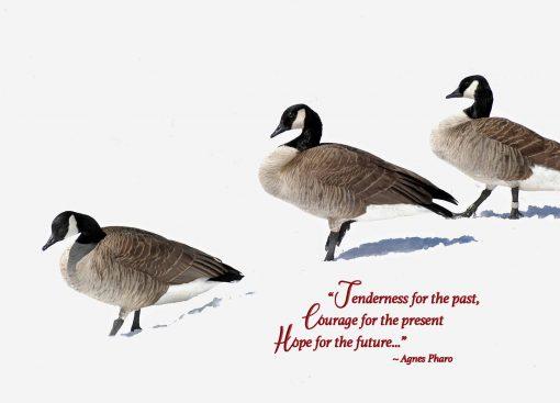 Canada geese Christmas card