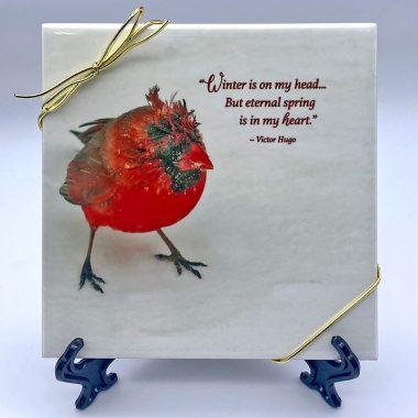 Eternal-spring-baby-cardinal