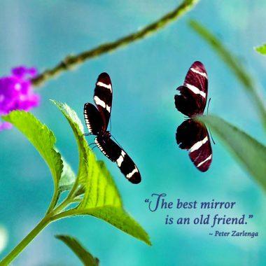 Butterfly Friendship Card