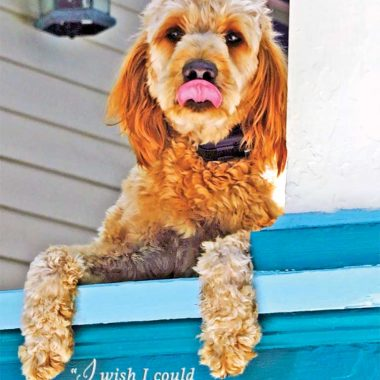 Golden doodle missing you birthday