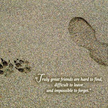 dog footprints pet sympathy card