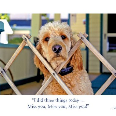 Miss-you-miss-you dog card