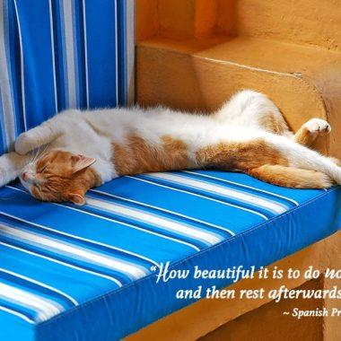 Sleeping Cat Retirement Card