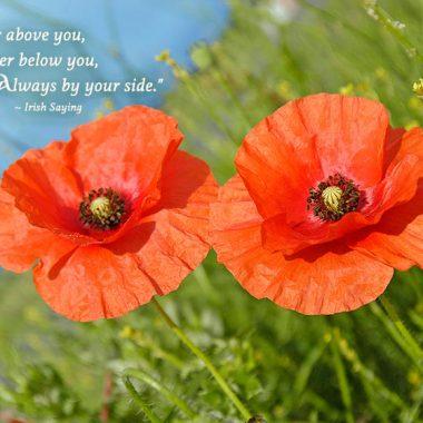Irish anniversary poppies greeting card