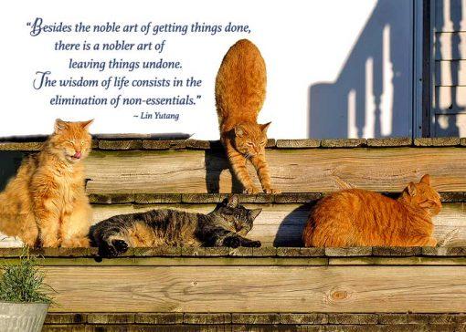 Porch cats birthday card