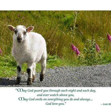 Baby sheep new baby card
