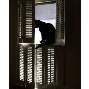 Cat pet sympathy card