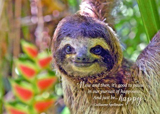 Happy sloth birthday card